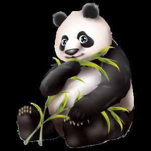 מדבקת קיר איכותית של גור דוב פנדה