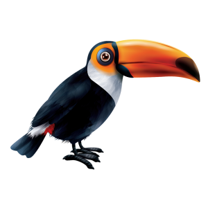 מדבקת קיר ציפורים- טוקן בצבעים שחור, לבן וכתום